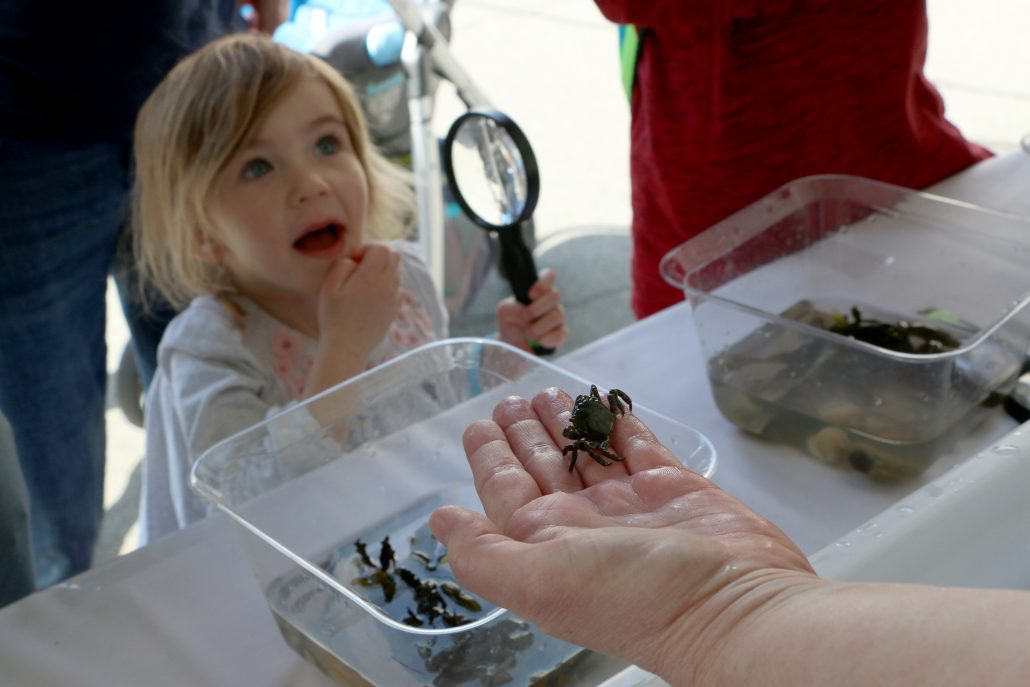 A young girl holding a magnifying glass looks on with excitement at a small crab in a staff member's hand