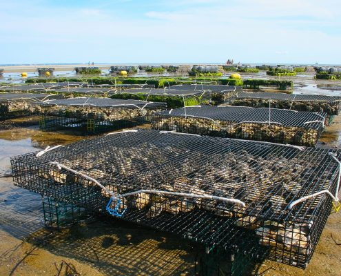 Oyster farm with many wire enclosures on flat wet sand