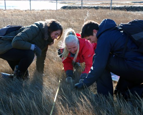 Three smiling students crouch in a salt marsh counting species of grass.