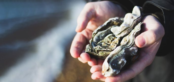 Hands holding an oyster