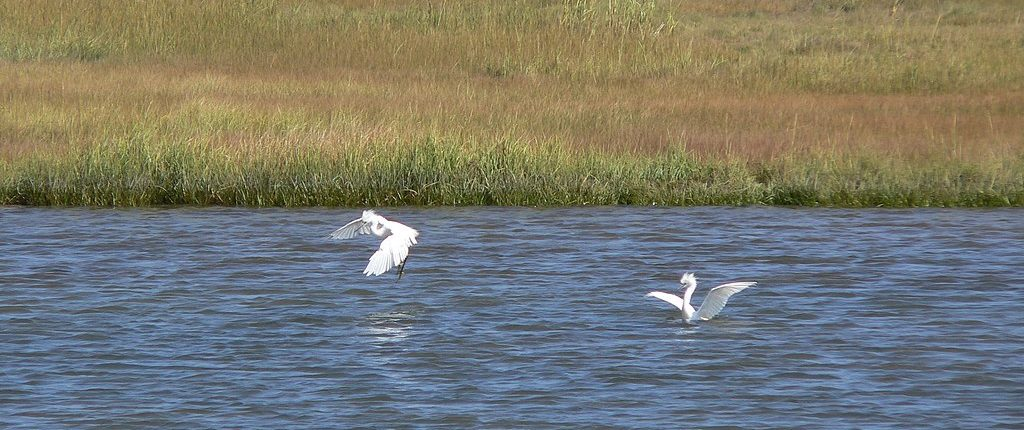 Belle Isle Marsh Reservation, with two white birds at a wetland