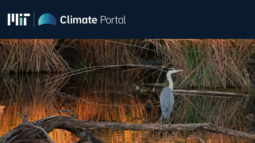 A heron in a marshy area with the MIT Climate Portal logo