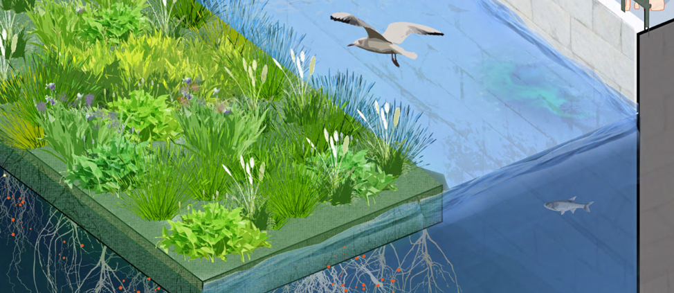 An illustration of the Charles River Floating Wetland