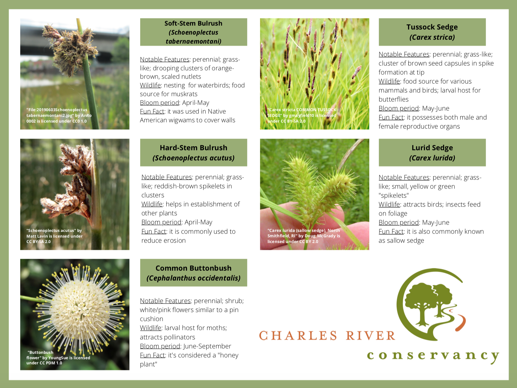 Plant guide for the Charles River Floating Wetland