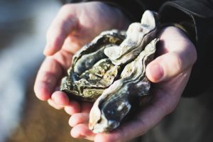 Two large oysters held in someones hands